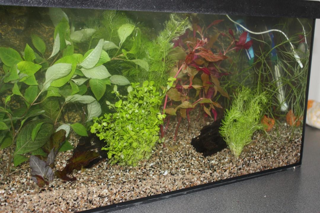 2018-cursus-aquarium-houden-28-custom