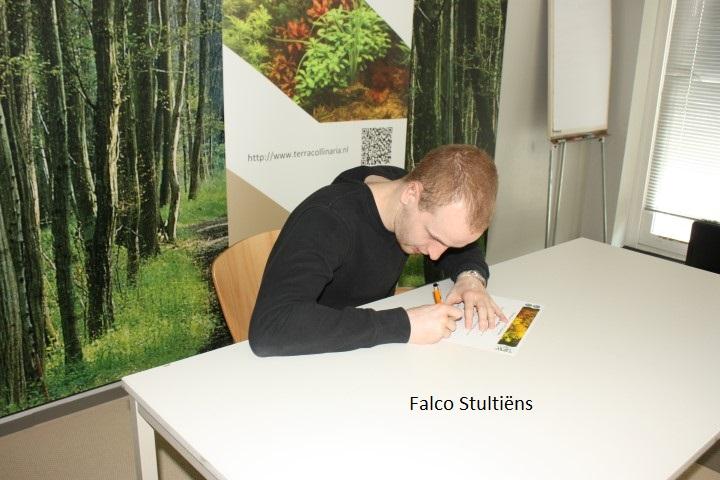 falco-stultiens