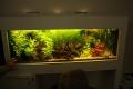 2016-cursus-aquariumhouden-16